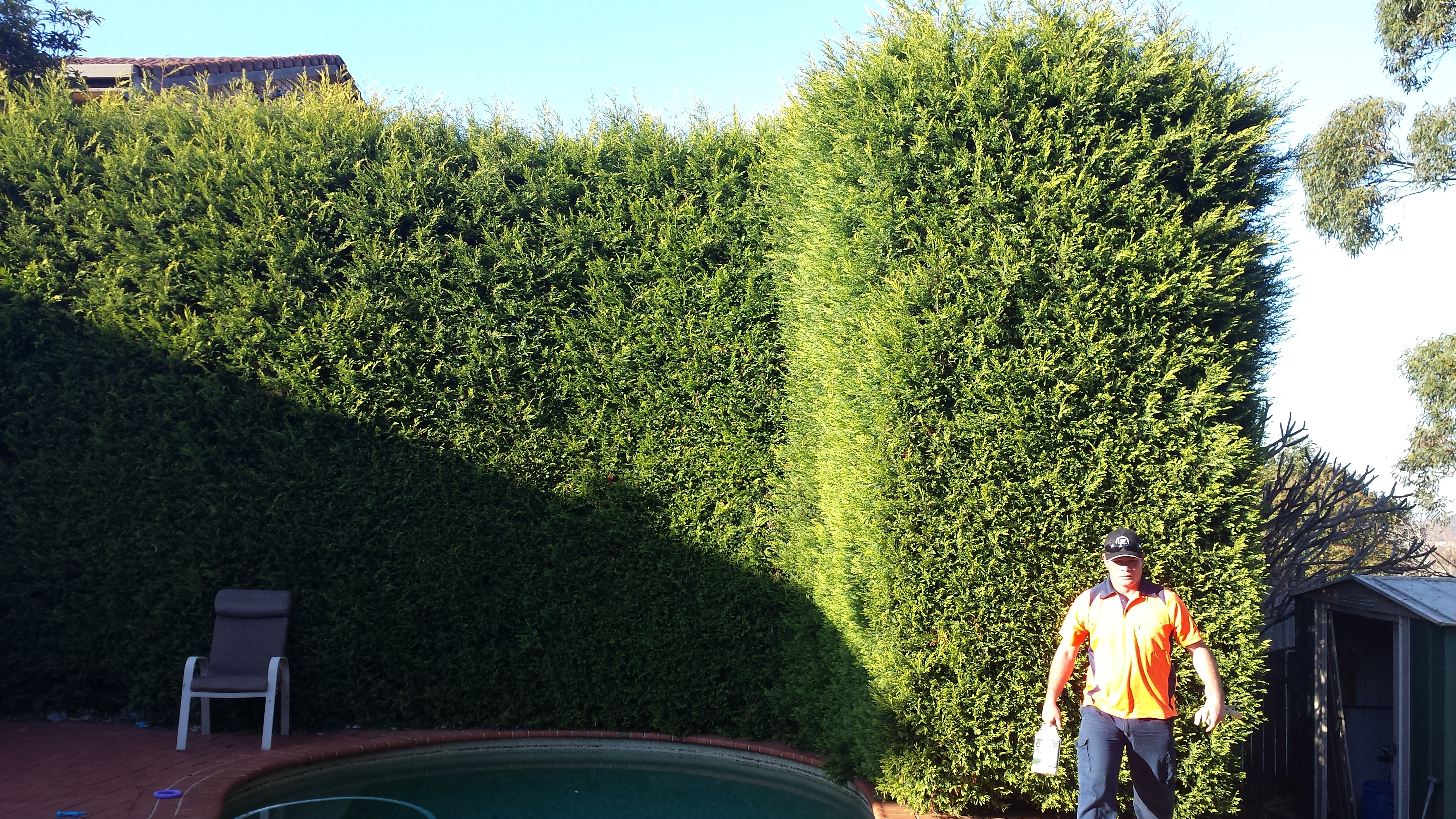 Hedge Triming